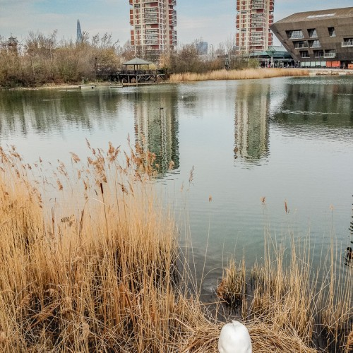 20160403_Southwark_Canada-Water_Parents-to-be