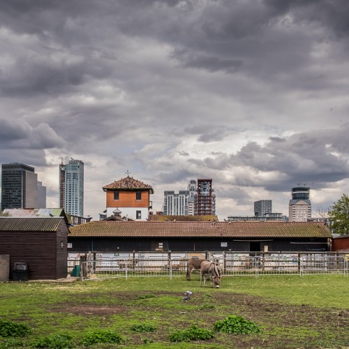 20160413_Southwark_Surrey-Docks-Farm_Shetland-Pony