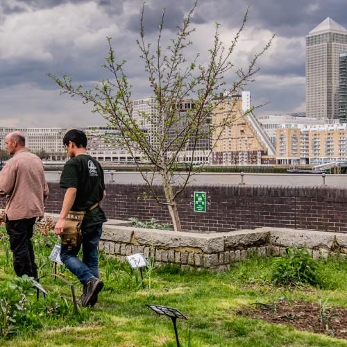 20160413_Southwark_Surrey-Docks-Farm_Swat-Gardeners