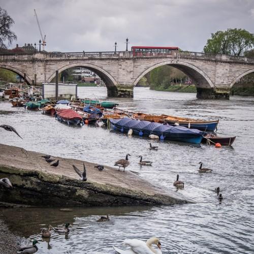 20160416_Richmond-upon-Thames_Thames-Path_Swan-and-Bridge