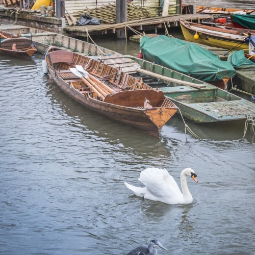 20160416_Richmond-upon-Thames_Thames-Path_The-Swan-and-The-Heron