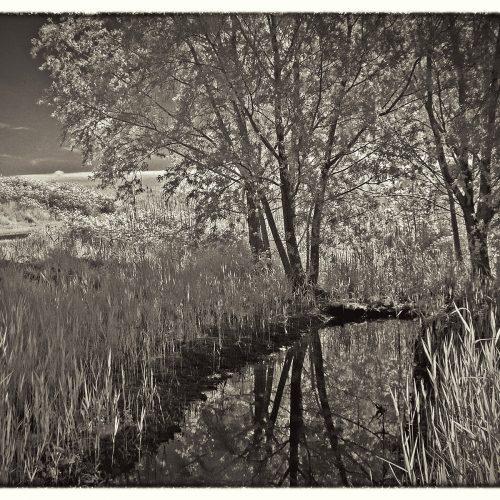 20160523_Redbridge_Claybury-Park_infra-red-pond