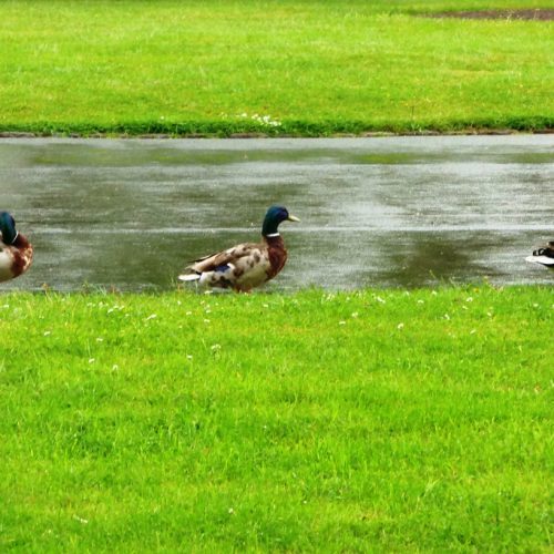 20160607_Redbridge_Valentines-Park_three-in-a-row