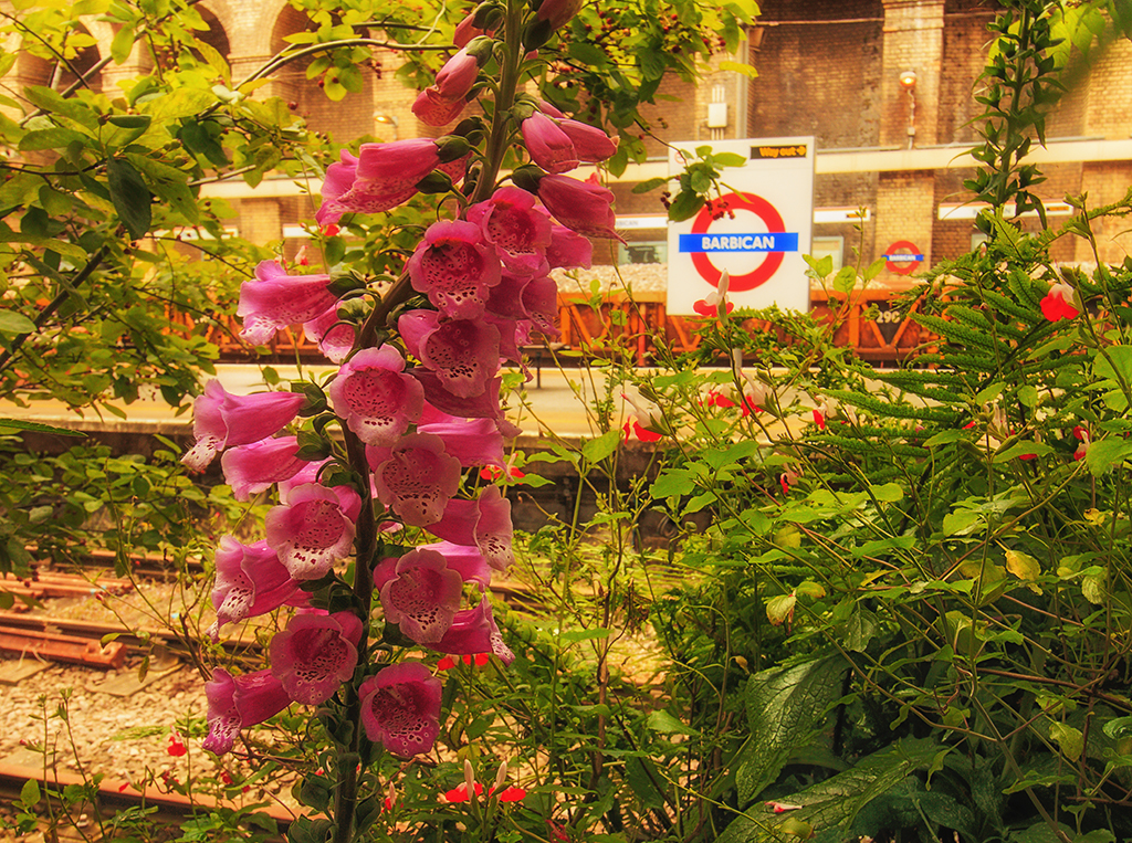 4077-N1-Barbican-Station-Pop-up-Garden-EC1A-4JA