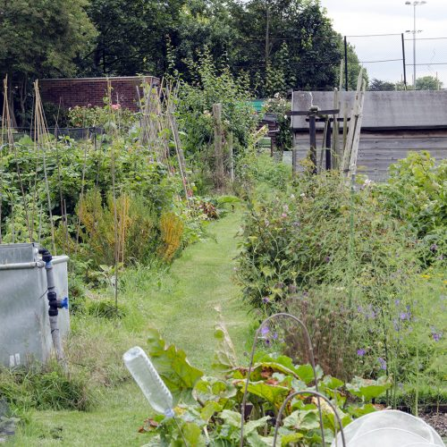 2016-07-13-Wandsworth_Beatrix-Potter-Allotments_Summer_Landscape