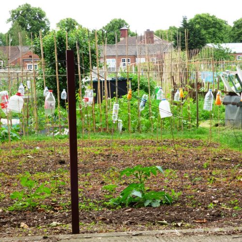 20160621_Barking-Dagenham_Barking-Park-Allotment_Bottle-Mania