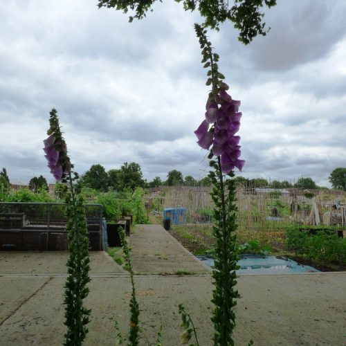 20160621_Barking-Dagenham_Barking-Park-Allotments_A-view-of-Barking-Allotments