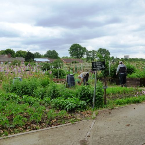 20160621_Barking-Dagenham_Barking-Park-Allotments_workaholics