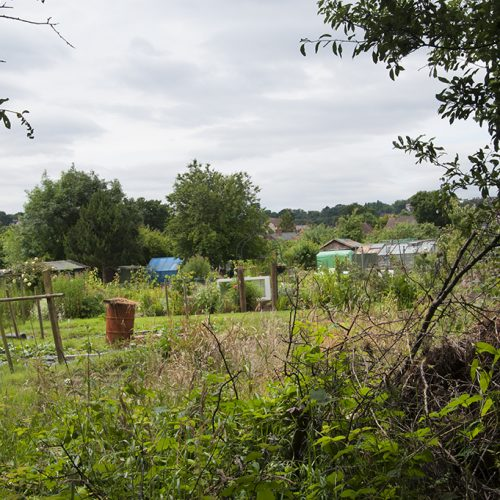 20160715_Barnet_Tudor-Road-Allotments_Looking-through-a-wire-fence