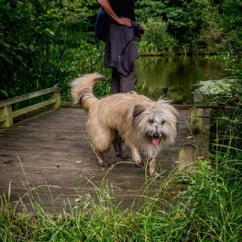 20160727_Enfield_Trent-Park_Water-is-Fun