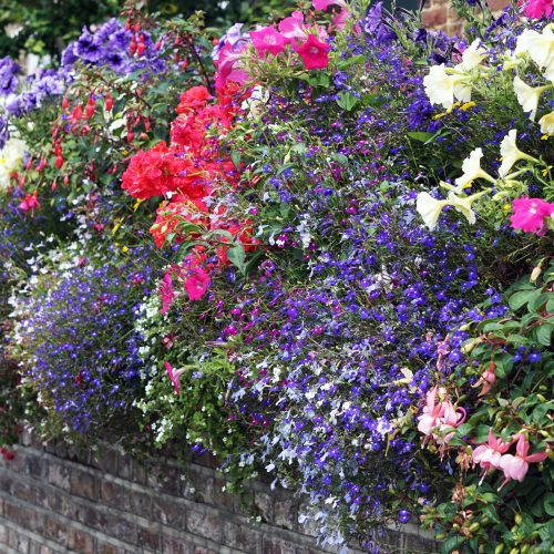 2016-08-03-Hounslow_Strand-on-the-Green_Flora_Summer_Window-Boxes