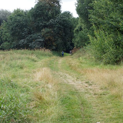 201608-10-LB-Merton_Morden-Hall_Landscape_Summer_Path-through-the-managed-wetlands