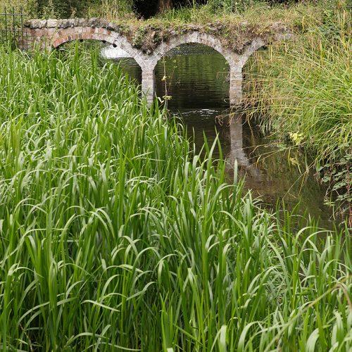 20160810_Merton_Morden-Hall-Park_Overgrown-arches