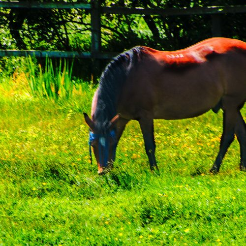 5787-horse-grazing-near-Sough-branch-grand-union