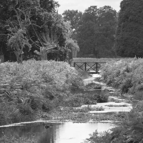 Stream_through_the_Park