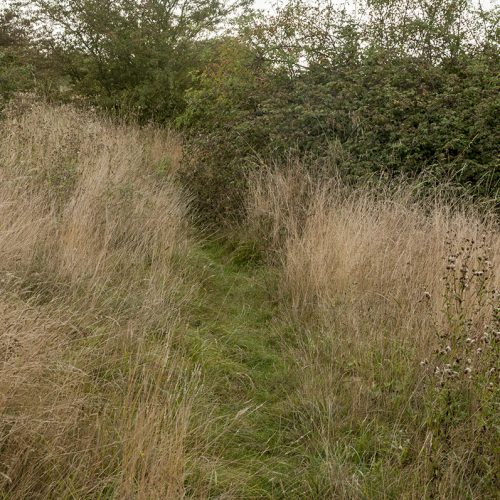 20160921-Havering-Tylers-Common-Autumn-Lonely-path-1-DSC_8655