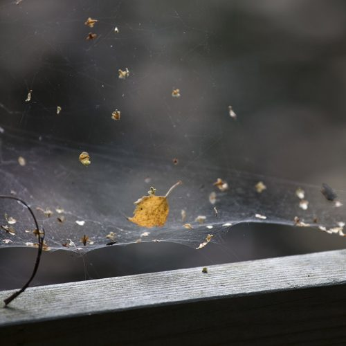Leaf-in-a-Web1