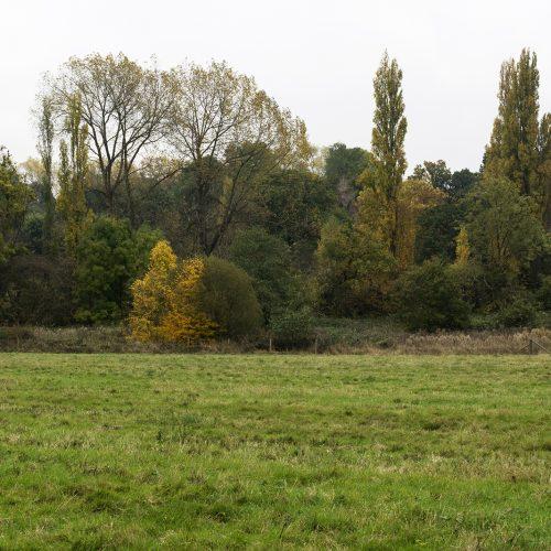 2016-10-29-Barnet-Totteridge-Fields_Landscape_Autumn-Turners-Landscape