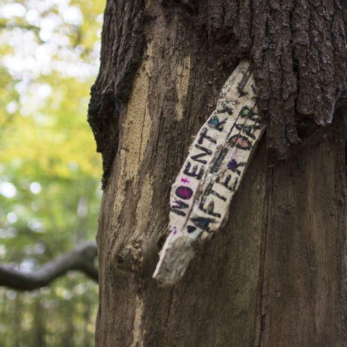 2016-10-29-Barnet_Barnet-Gate-Wood_Autumn_Detail-Do-not-enter-after-dark