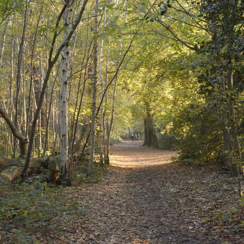 2016-11-11-Bromley_Autumn_Landscape_National-Trust-Petts-Wood