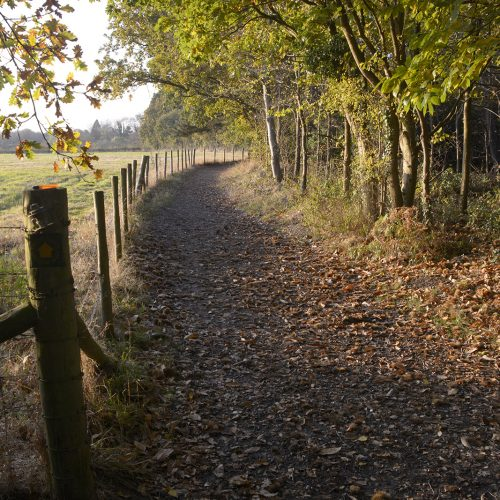 2016-11-11-Bromley_Autumn_Landscape_National-Trust-Petts-Wood-Path