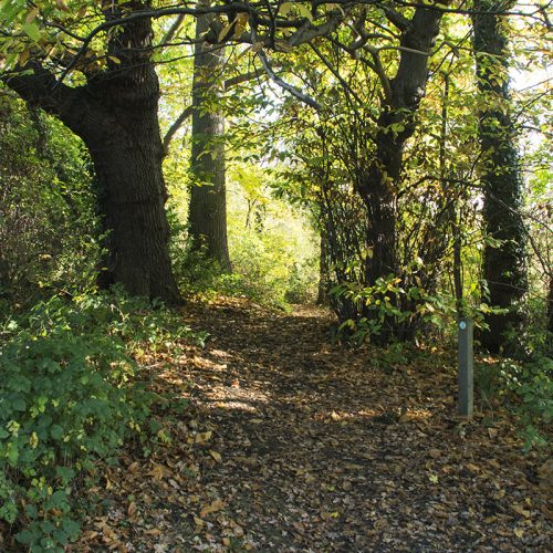 2016-11-11-Bromley_Nature-Reserve_Autumn_Landscape-Scadbury-Nature-Reserve_Little-Wood