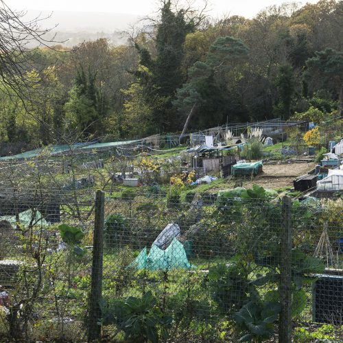 2016-11-24-Croydon_Landscape_Autumn_Allotments-Biggin-Wood-Allotments
