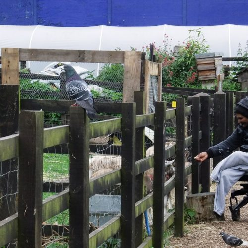 20160530_Tower-Hamlets_Stepney-City-Farm_Leisurely-Feeding-the-Animals