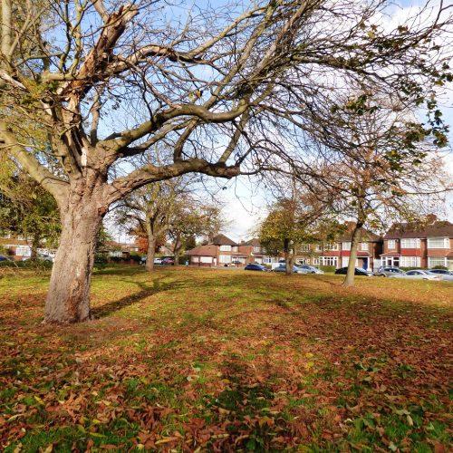 20161107_Brent_Sherborne-Gardens_Bare-Tree-at-Sherborne-Gardens