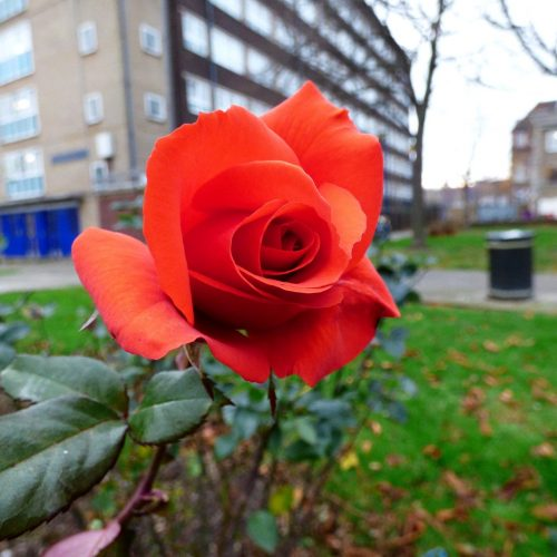 20161208_Tower-Hamlets_Guerin-Square_Guerin-Square