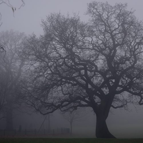 Foggy-Tree-03