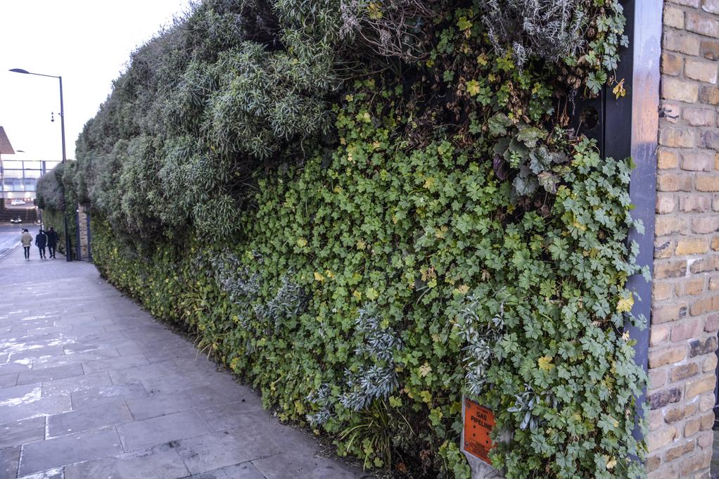 20161228_Camden_Camley-Street_-Living-wall