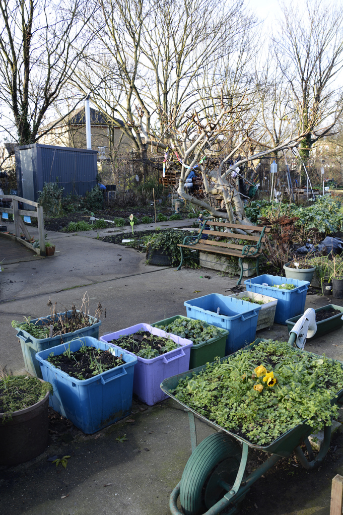 20170106_Southwark_-Surrey-Canal-Allotments_Waiting-for-spring