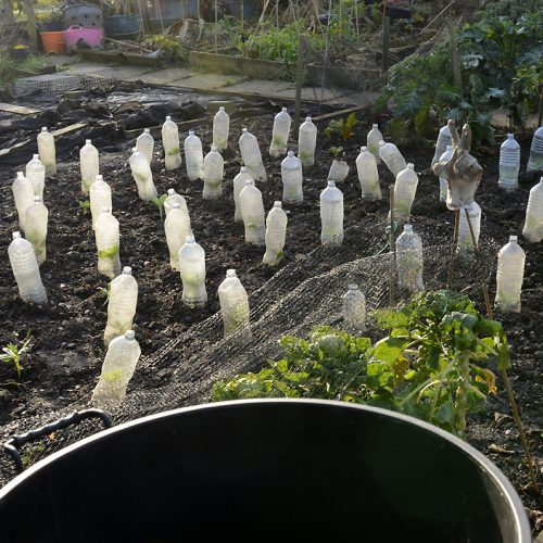 20170106_Southwark_Surrey-Canal-Allotments_Greenhouses