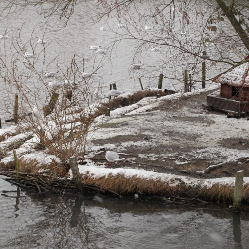 20170113_Croydon_Millers-Pond_Any-port-in-a-storm