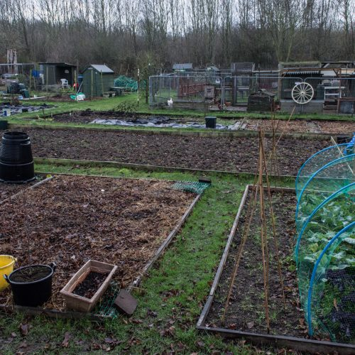 Hook-Farm-Allotments-Bromley-DSP1407