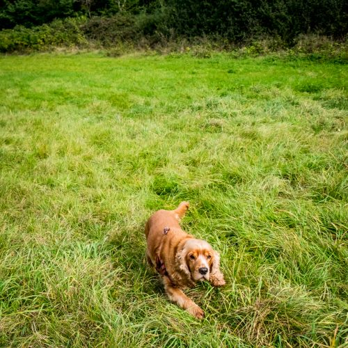 20161012_Hillingdon_Celandine-Route_Dog-in-the-grass