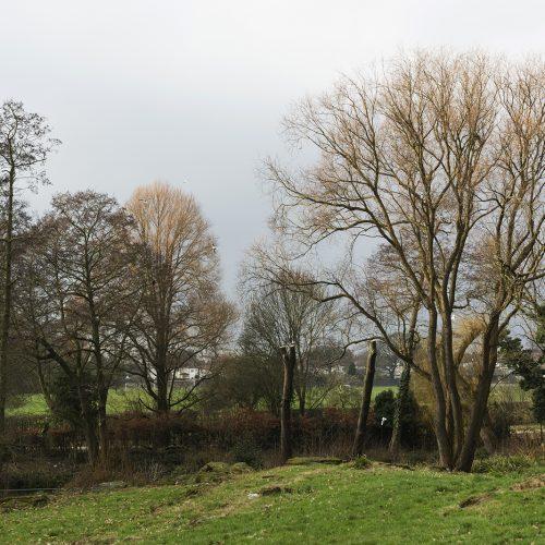 2017-02-15-Danson-Park_Winter_Flora_Landscape-Winter-Treescape