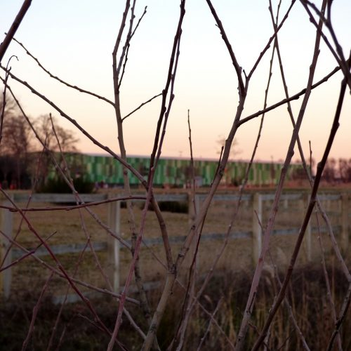 20170121_Barking-and-Dagenham_Mayesbrook-Park_Barely-A-View