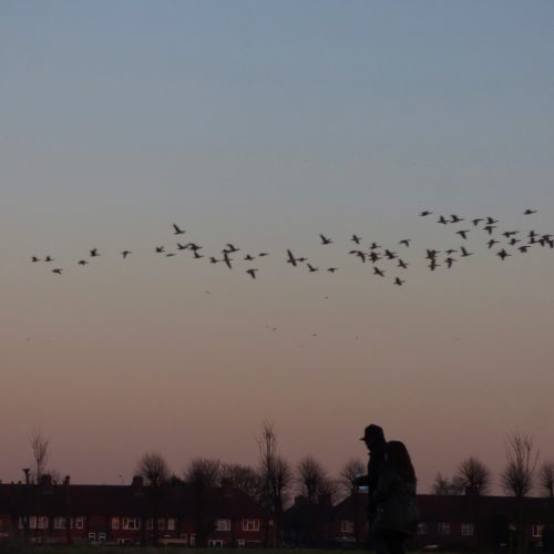 20170121_Barking-and-Dagenham_Mayesbrook-Park_Migrating-Through-The-Park