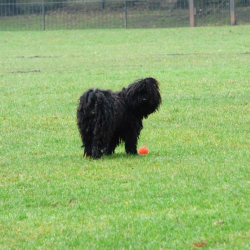20170211_Borough-of-Camden_Kilburn-Grange-park_Me-and-my-Ball