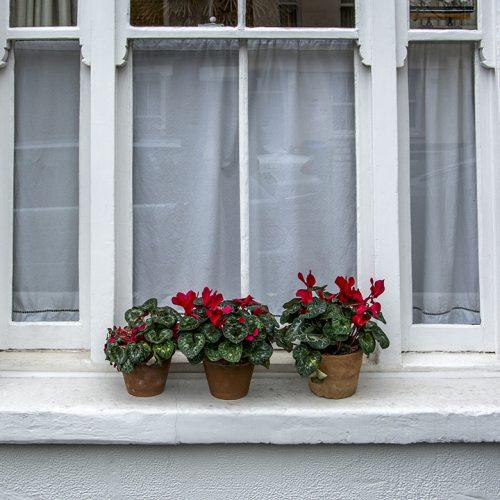 20170211_Greenwich_Ballast-Quay_Three-flower-pots