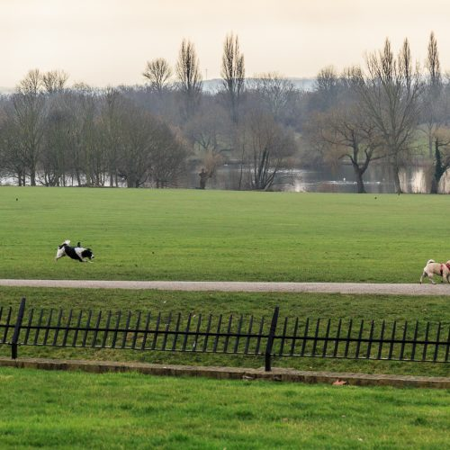 20170215_-Bexley_Danson-Park_Walking-the-dogs