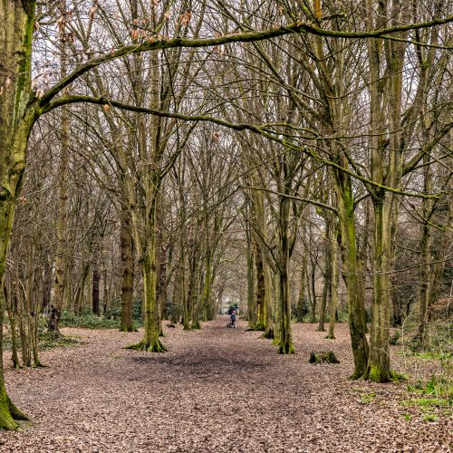 20170215_Bexley_Bexley-Park-Wood_Woodland-path