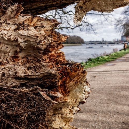 20170223_Richmond-Upon-Thames_Barn-Elms_Aftermath-of-Doris