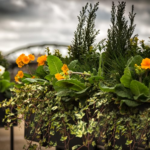 Barnes-Bridge-Flower-Baskets