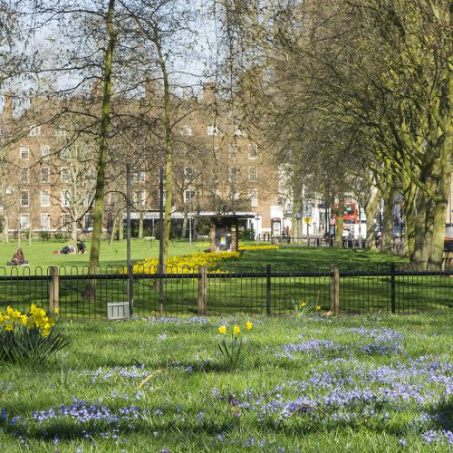 20107-03-15-Hammersmith-Fulham_Eel-Brook-Common_Landscape_Spring-Spring-Flowers
