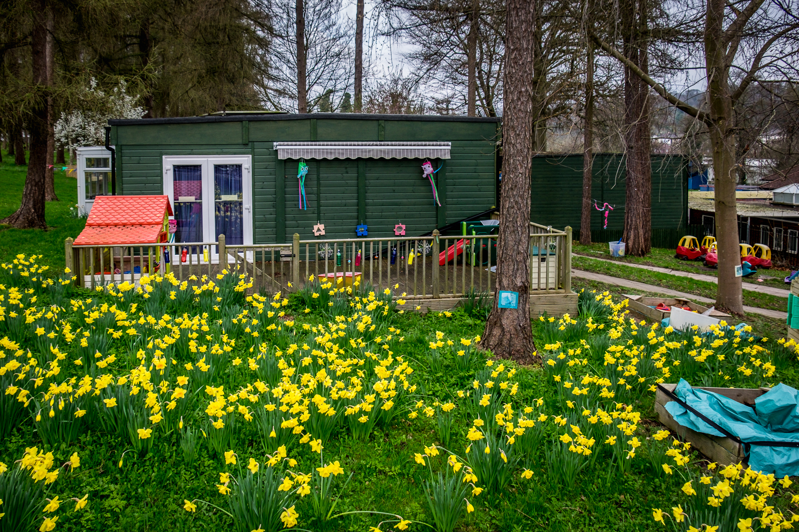 20170323_Croydon_Kenley-Kindergarten_Daffodils-R-Us