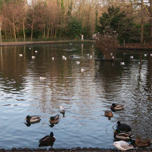 32-Busy-Pond-Peckham-Rye-Park-27_12_16
