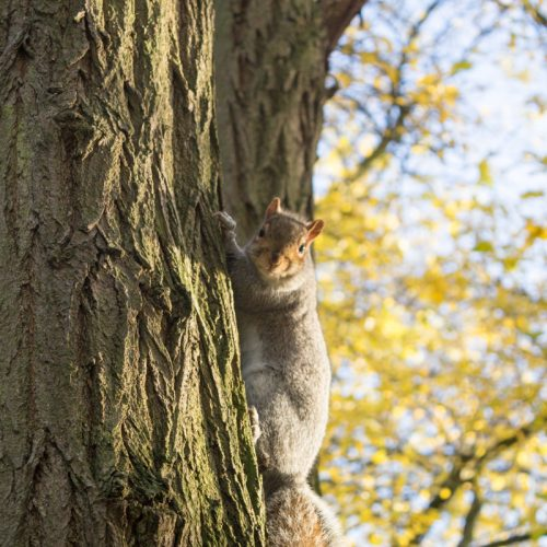 Crystal Palace Squirrel